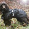Back on Track regntäcke Hund